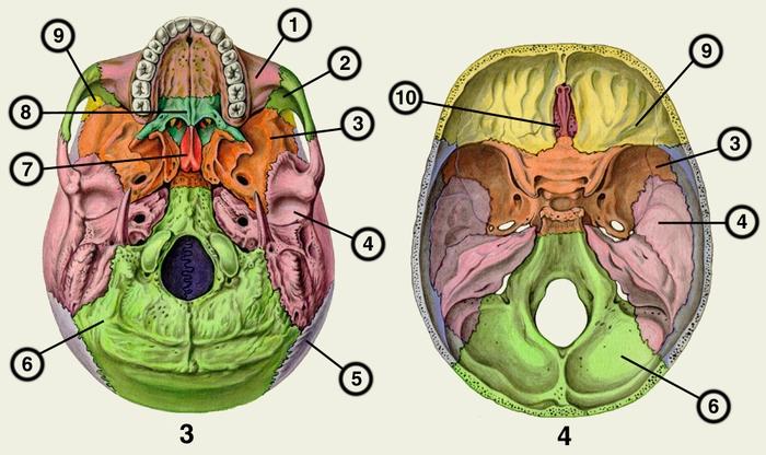 Рак костей черепа симптомы